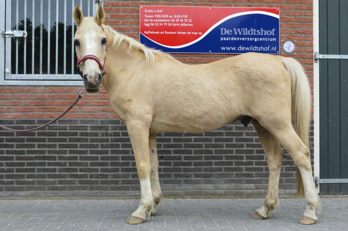 BLOG: PPID-paarden worden hier gewoon 30 jaar